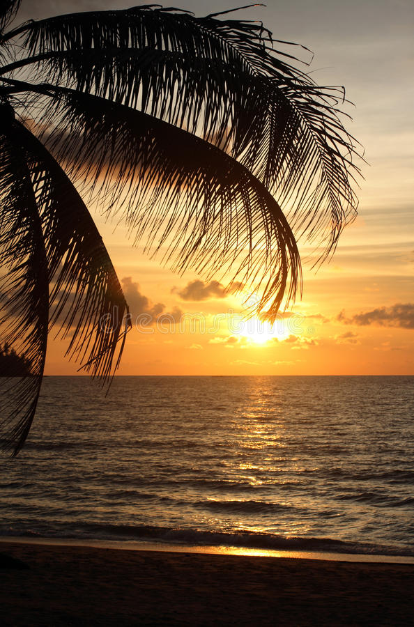 Download Sunset with palm tree stock image. Image of summer, clouds - 11767761