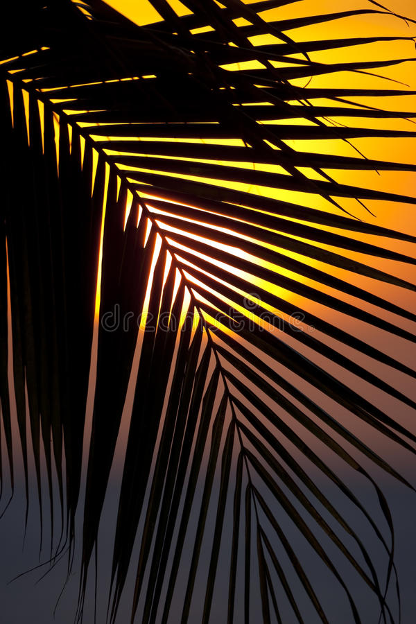 Download Sunset Through A Palm Tree Frond Stock Image - Image: 13737917