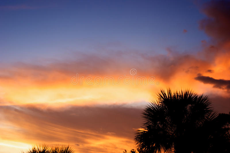 Download Sunset with palm trees stock image. Image of clouds, silhouette - 11191965