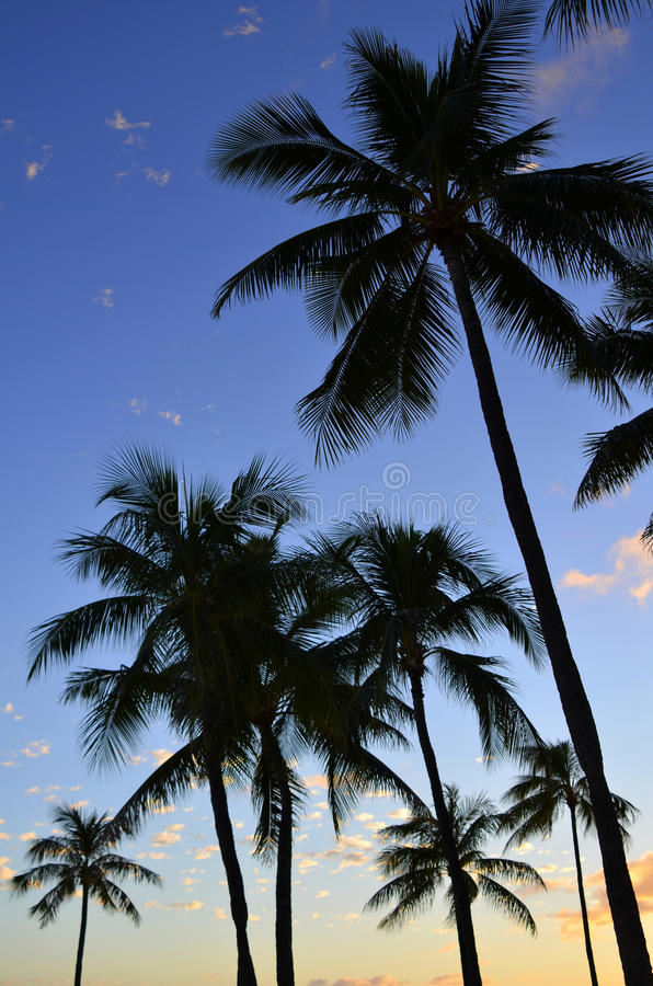 Download Sunset Palm Trees stock image. Image of carribbean, dusk - 19969259