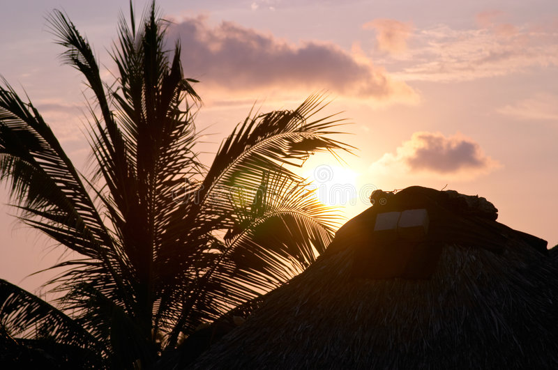 Sunset and palm trees stock photo