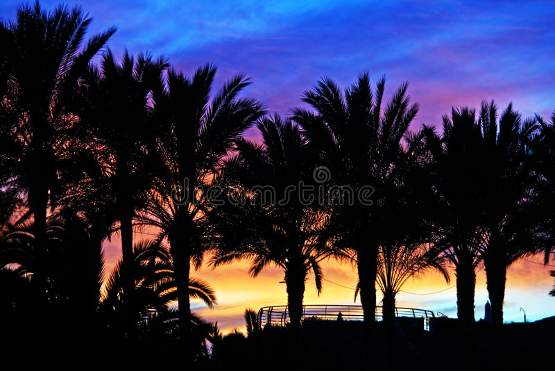 Sunset palms. Tropical palms silhouettes against colorful sunset stock image