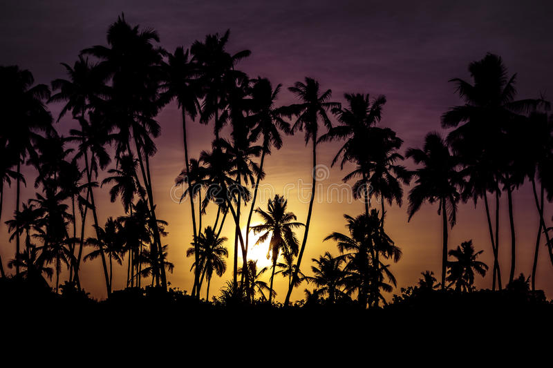 Sunset with palms. Beautiful sunset with palms in Zanzibar royalty free stock image