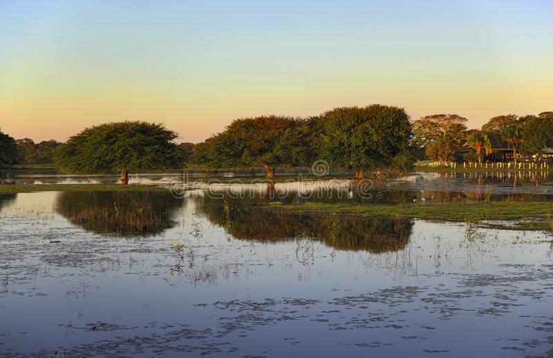 Sunset in Pantanal stock photography