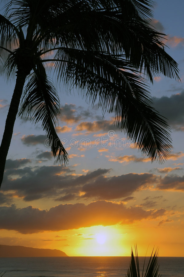 Download Sunset in Paradise stock photo. Image of ocean, trees - 2073536