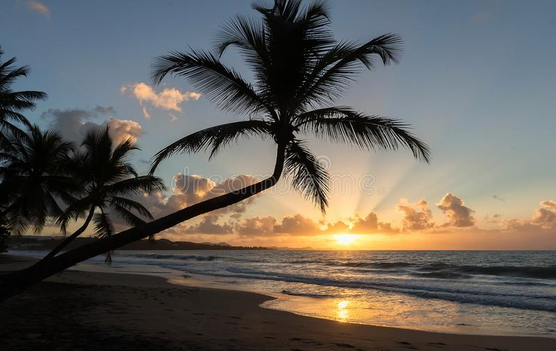 Sunset, paradise beach and palm trees, Martinique island. stock photo