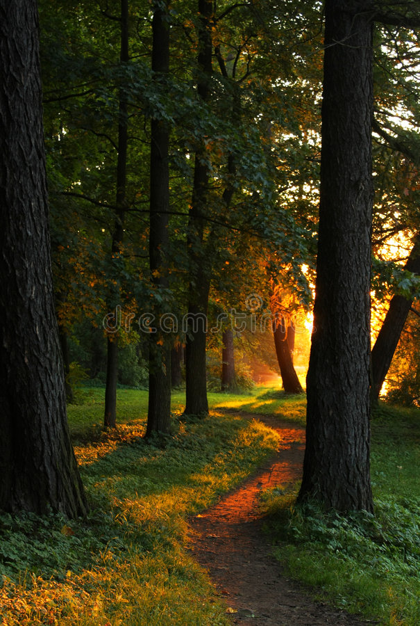 Download Sunset in the park stock image. Image of gold, yellow - 6723519