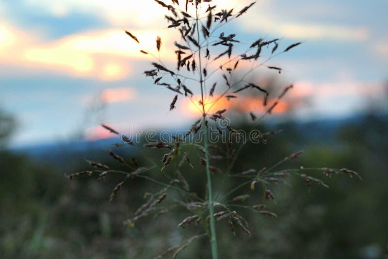 Maury County Sunset stock photos