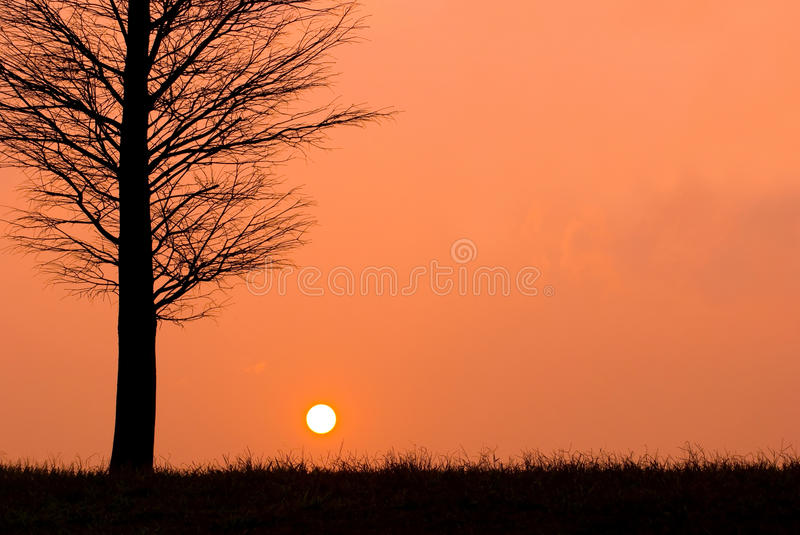 Sunset in a peaceful evening, field view. royalty free stock image