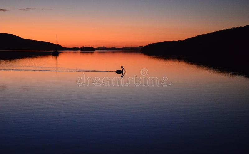 Sunset pelican reflection royalty free stock photos