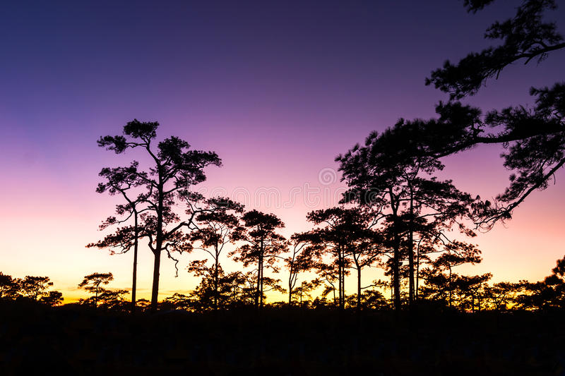 Download Sunset And Pine Trees Stock Photography - Image: 29270032