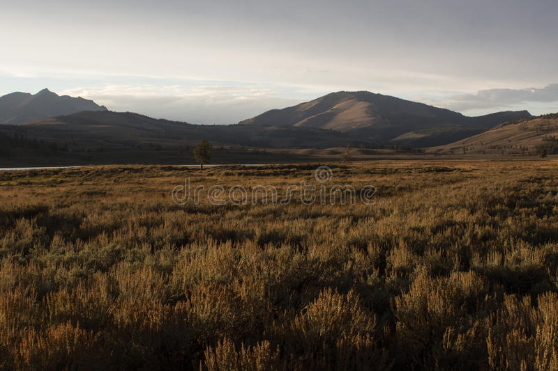 Sunset on the Plains. Sunset at one of the great plains in Yellowstone NP royalty free stock photo