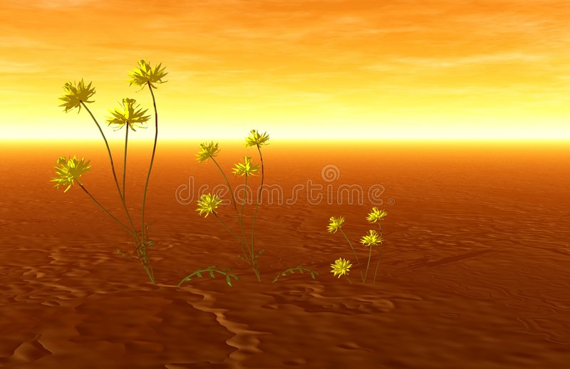 Sunset and plants royalty free stock images