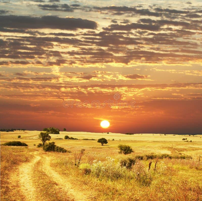 sunset pola obrazy royalty free