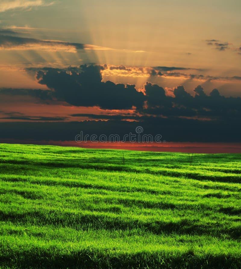sunset pola zdjęcie royalty free