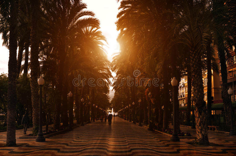Download Sunset Promenade With Palms Along It, Spain Stock Photo - Image: 18480934