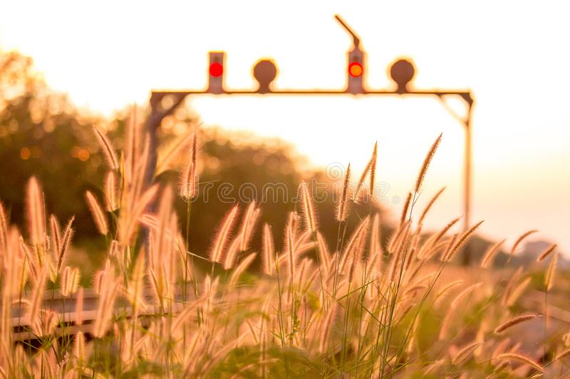 Sunset at railway of train and grass flower on background. royalty free stock image
