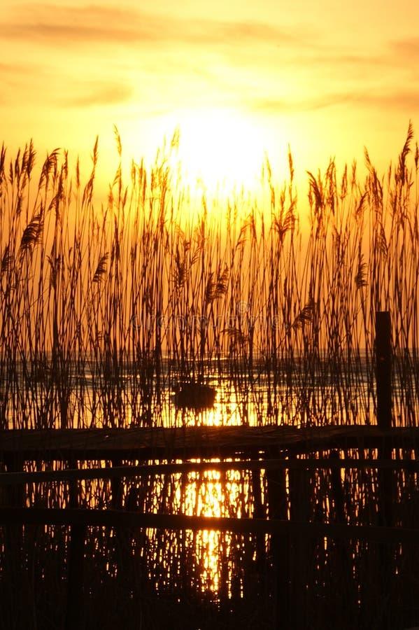 Sunset through reed royalty free stock image