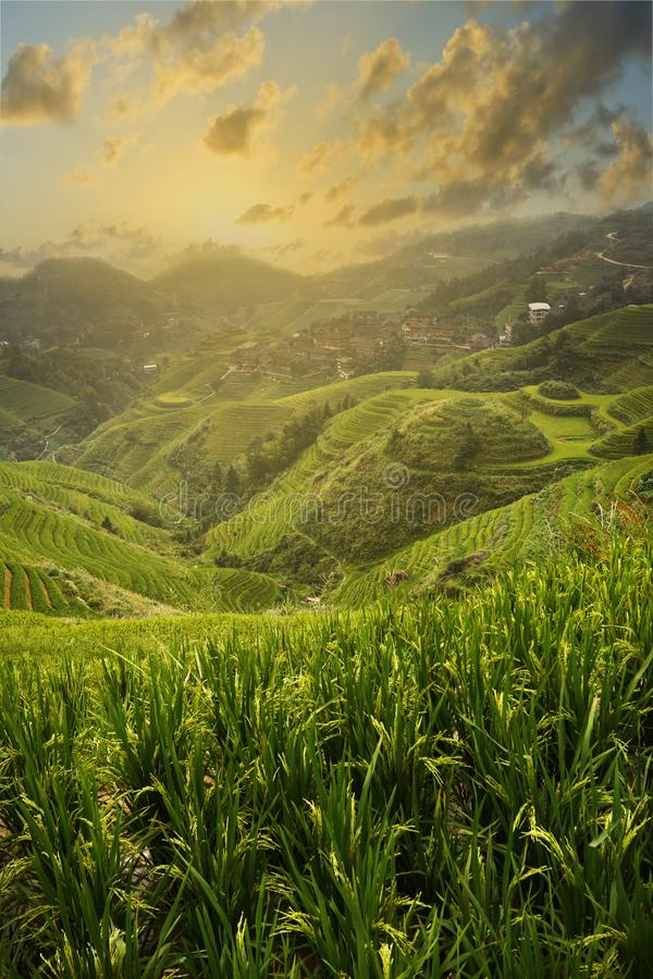 Sunset on the rice filed terrace in the countryside of Dazhai ,Shanxi province ,China. Its the end of the day, its sunset time on the rice filed terrace in the stock photo
