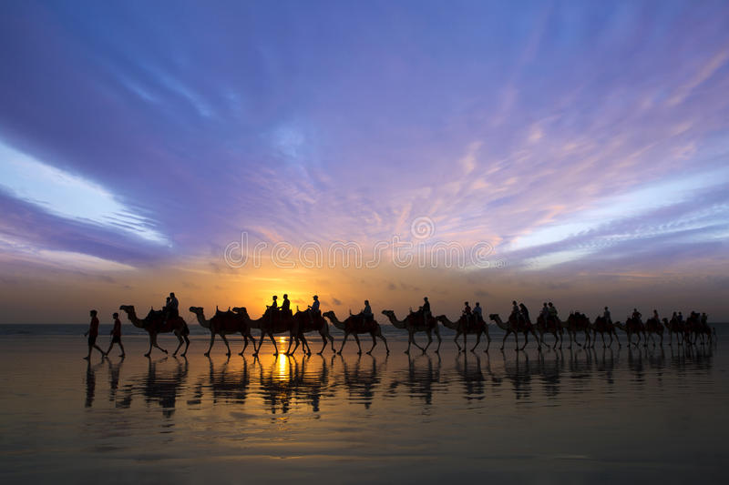 Sunset Ride. Sunset Camel ride on low tide at Cable Beach, Broome Western Australia royalty free stock photography