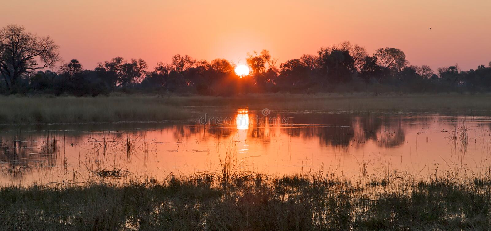 Sunset River. A panoramic view of the sunset over the Okavango river delta in Botswana stock photos