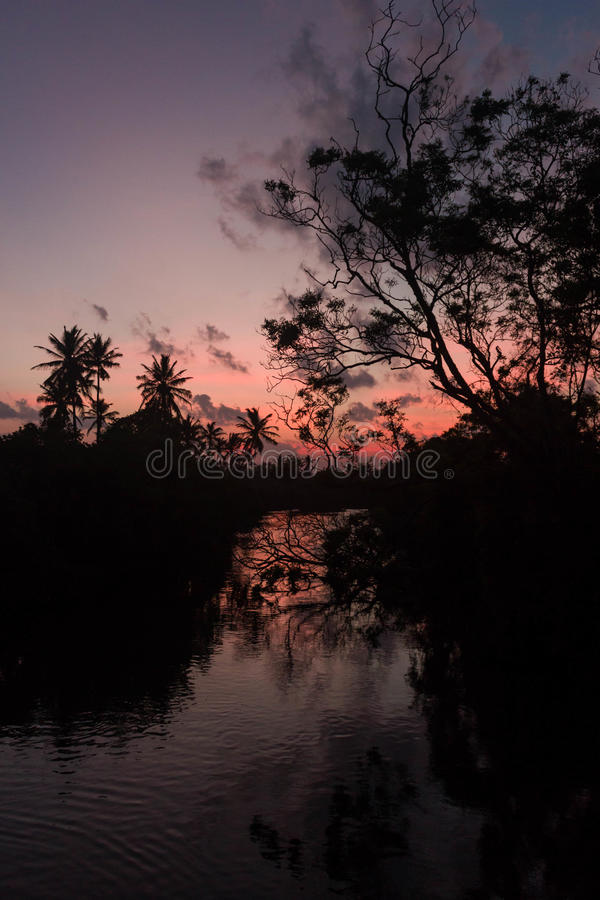 Sunset on the river silhouette of trees and palm reflection royalty free stock image