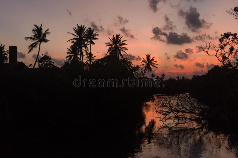 Sunset on the river silhouette of trees and palm reflection stock photo