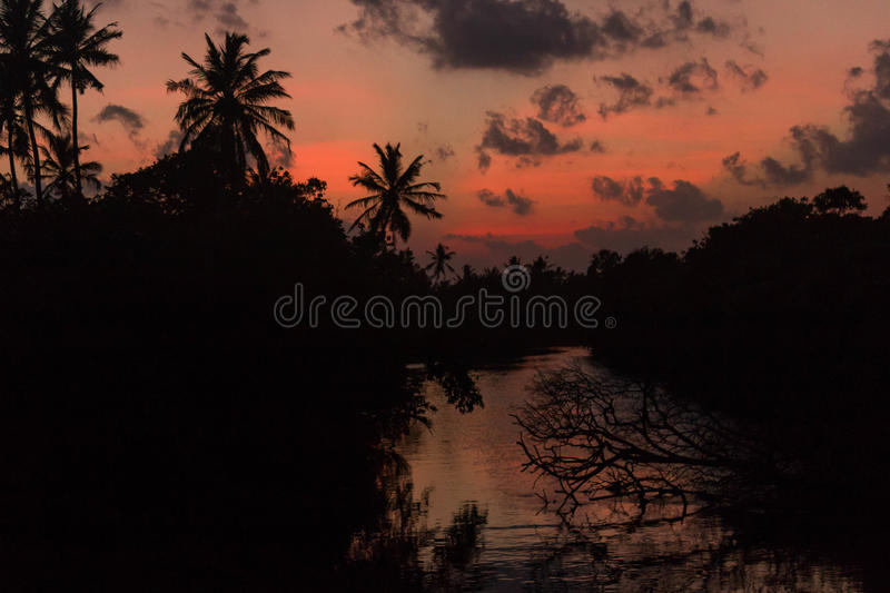 Sunset on the river silhouette of trees and palm reflection royalty free stock photo