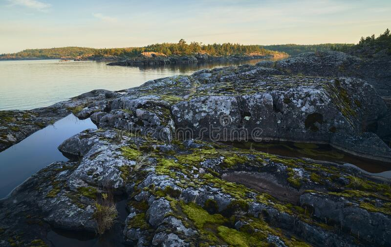 Sunset on a rocky shore. Pine forest in the background stock photo