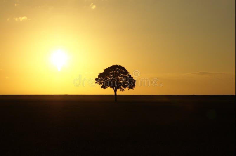 sunset samotne drzewo obrazy royalty free