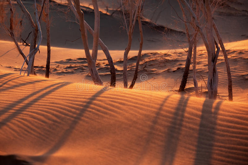 Download Sunset in sand desert stock photo. Image of scenics, outback - 14861320