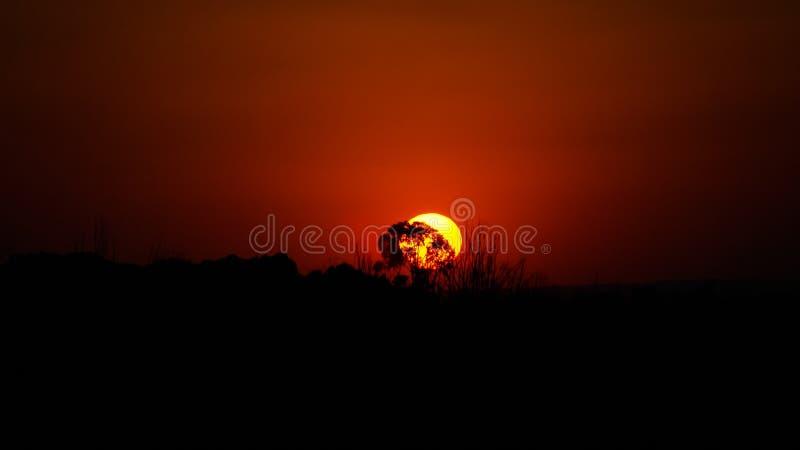 Sunset in savanna near Botshabelo, Mpumalanga, South Africa royalty free stock images