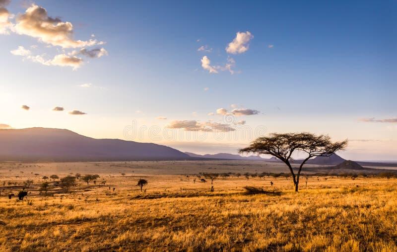Sunset at savannah plains. Amazing sunset at savannah plains in Tsavo East National Park, Kenya royalty free stock photos