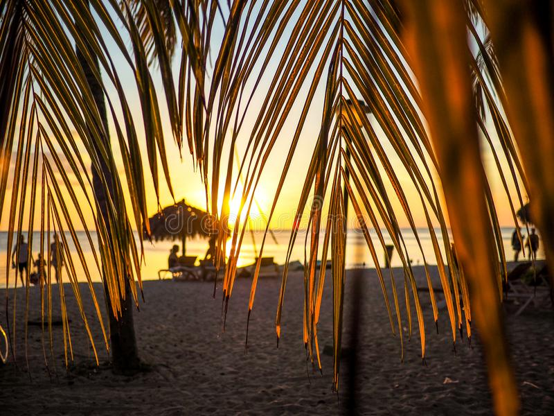 Sunset scene framed by palm leaves royalty free stock photos