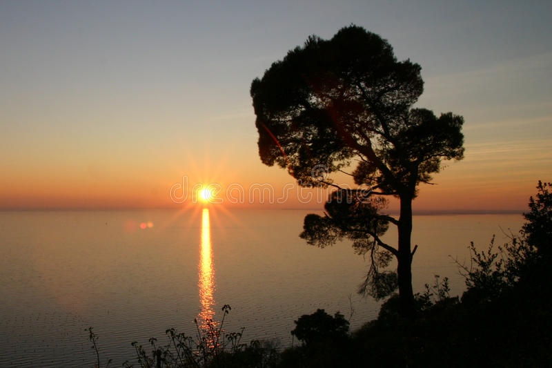 Download Sunset on the sea stock photo. Image of tree, maritime - 10783582