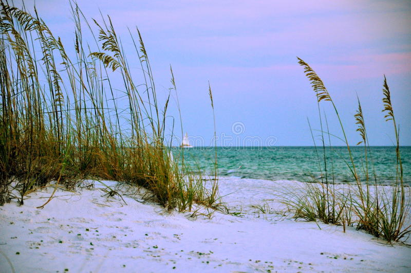 Sunset through the sea oats with sailboat royalty free stock photography
