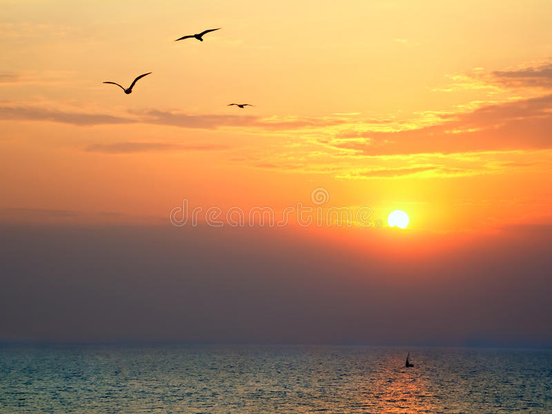 Sunset at sea with seagulls in foreground. Sunset on the sea with seagulls soaring in the foreground royalty free stock image