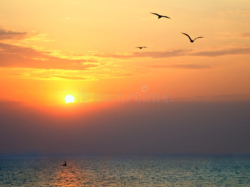 Sunset at sea with seagulls in foreground. Sunset on the sea with seagulls soaring in the foreground royalty free stock photography