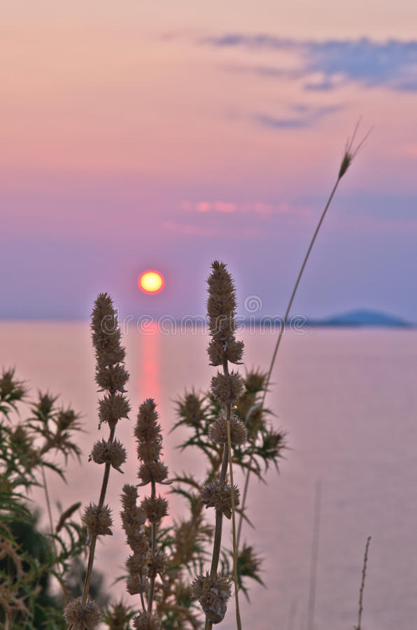 Sunset at sea with some mediterranean herbs in foreground at Sithonia royalty free stock images