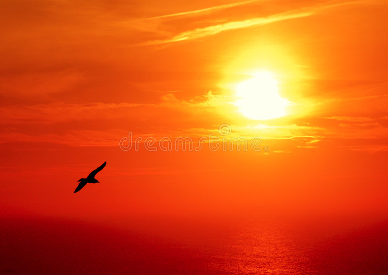 Sunset seagle stock photography