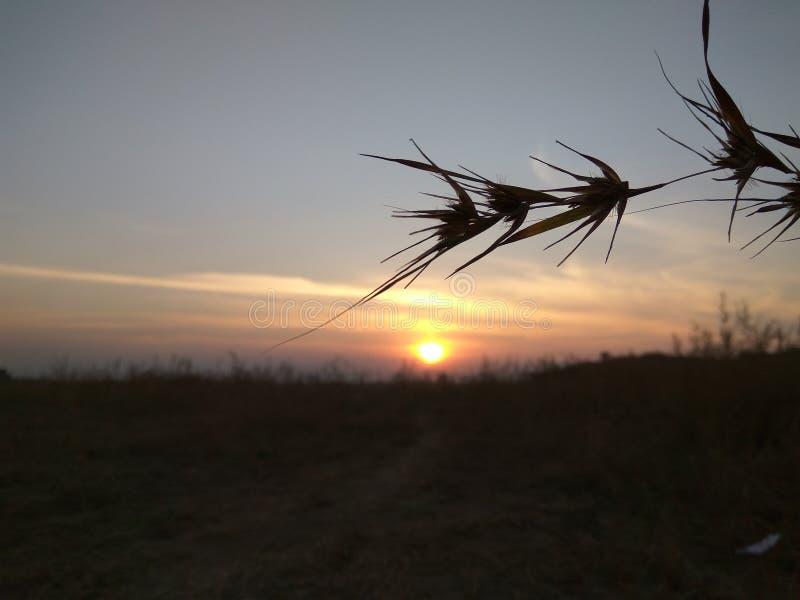 Sunset Shoots royalty free stock image