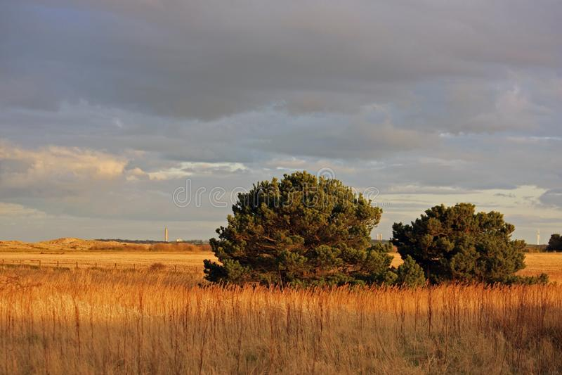 Sunset shrubs royalty free stock images