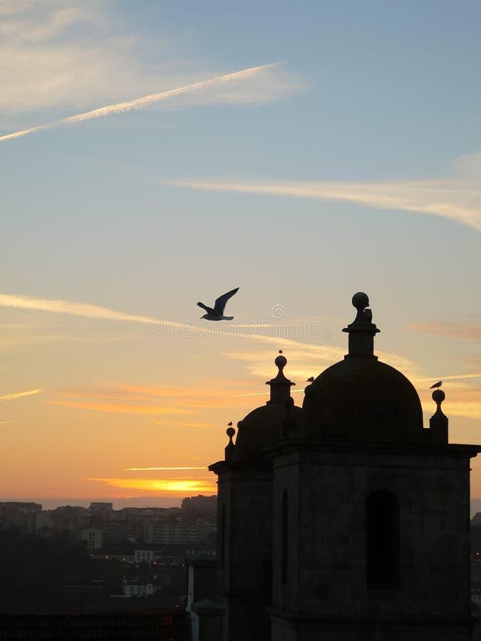The sunset silhouette bird stock photography