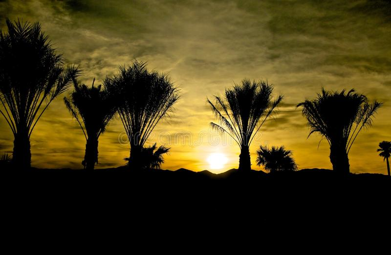 Sunset silhouette palm trees. Golden sunset in Death Valley Desert creates a black silhouette of palm trees and mountain stock image