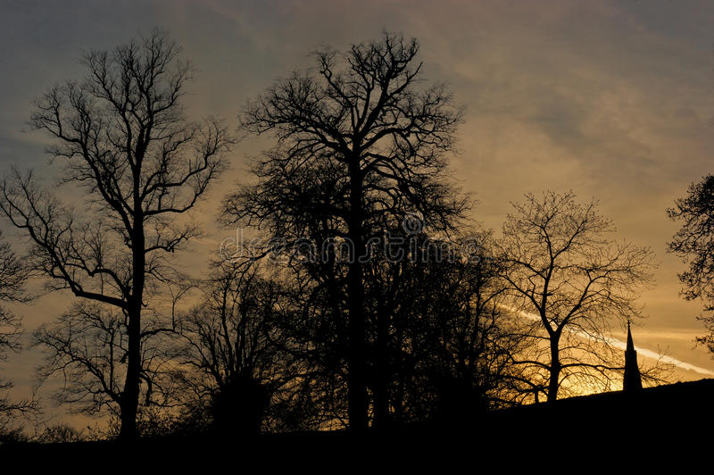 Sunset Silhouette. Studle Royal Ripon Yorkshire UK royalty free stock photo