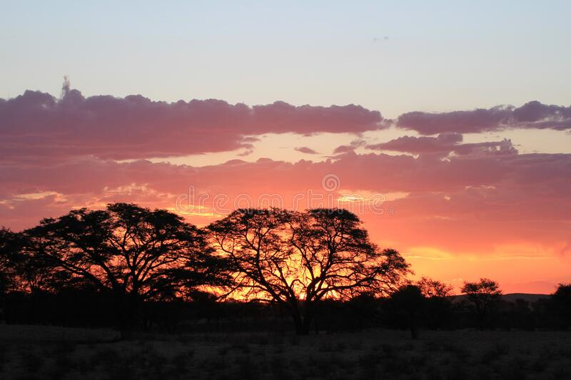 Sunset with silhouette of trees stock images