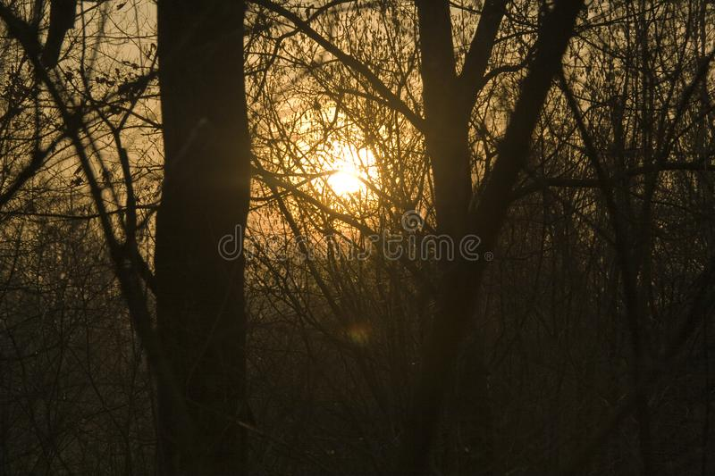 An Orange Sunset through silhouetted trees. Background of Orange Sunset Through silhouetted Forest of Trees in The Netherlands stock photography