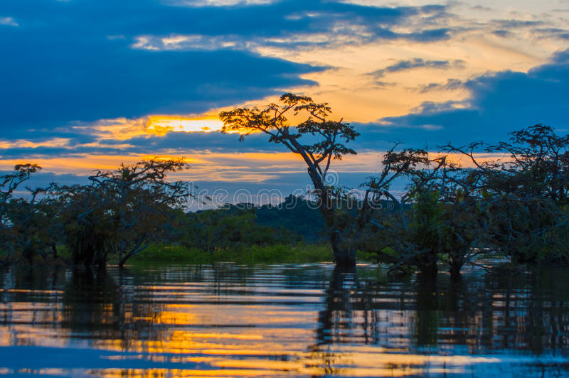 Sunset silhouetting a flooded jungle in Laguna Grande, in the Cuyabeno Wildlife Reserve, Amazon Basin, Ecuador.  royalty free stock images
