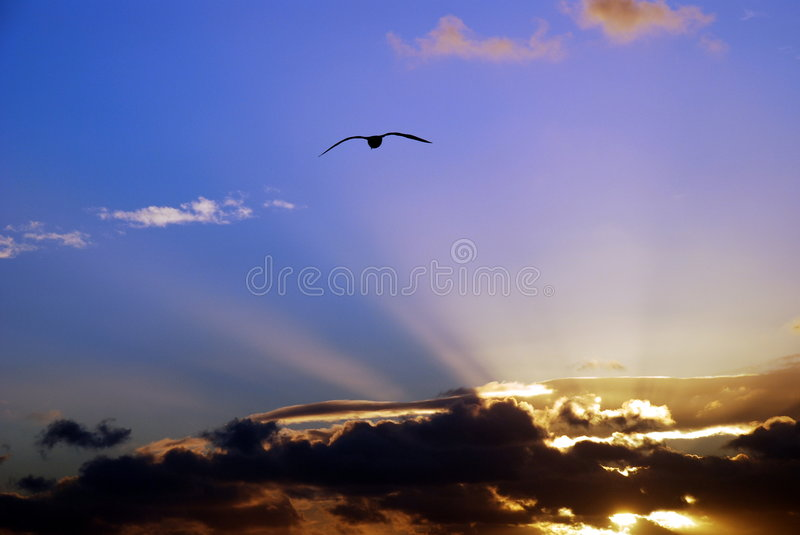 Download Sunset sky stock image. Image of rough, soaring, wild - 1647247
