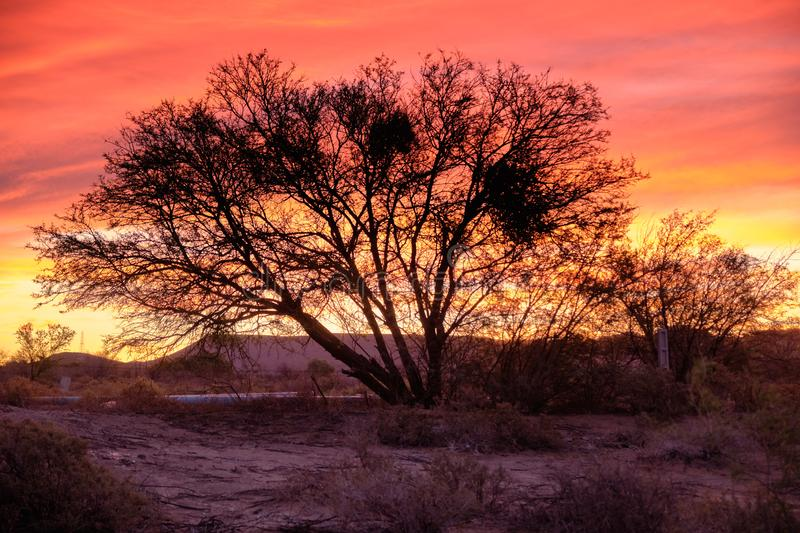 Sunset sky in wild Great Karoo. Sunset sky of orange and yellow in the vast Karoo of South Africa. Focus on silhouette of large leafless tree with wide reaching stock photography